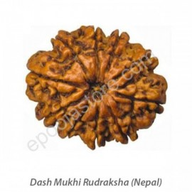 Dasha Mukhi Rudraksha With Silver Capping