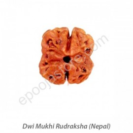 Dwi Mukhi Rudraksha With Silver Capping